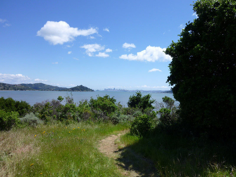 San Francisco Bay From Tiburon Audubon