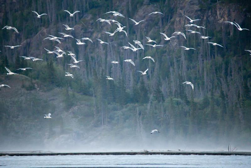 Alaska Copper River-8342.jpg