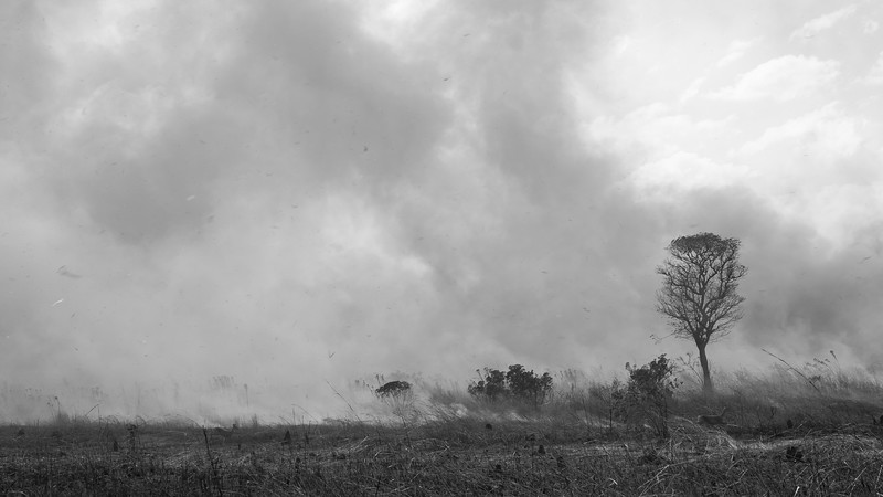 Controlled Burning Operations
