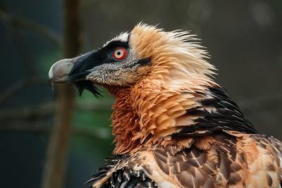 Tierpark Goldau II