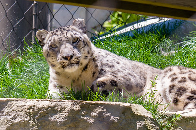 Cleveland Zoo June 21, 2019
