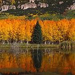 Autumns Reflection Row.jpg