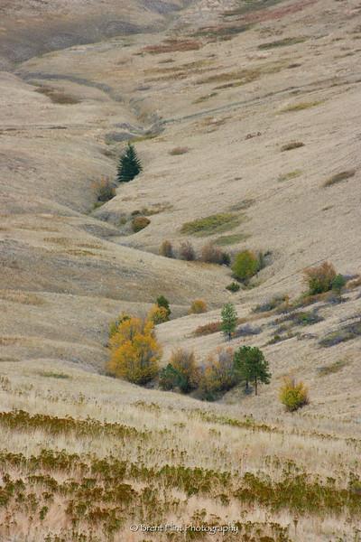 DF.1510 - fall color on hillsides, National Bison Range, MT.