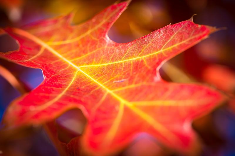 20151024-Fall Colors-68.jpg