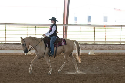 Horse 397