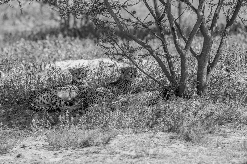Tanzania_Feb_2018-48.jpg