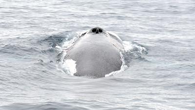 Whale Watch - July 21, 2013