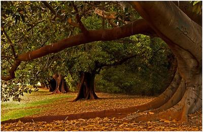 201001 - Tree Study
