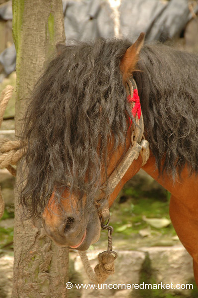 Horse with Long Hair - Guizhou Province, China