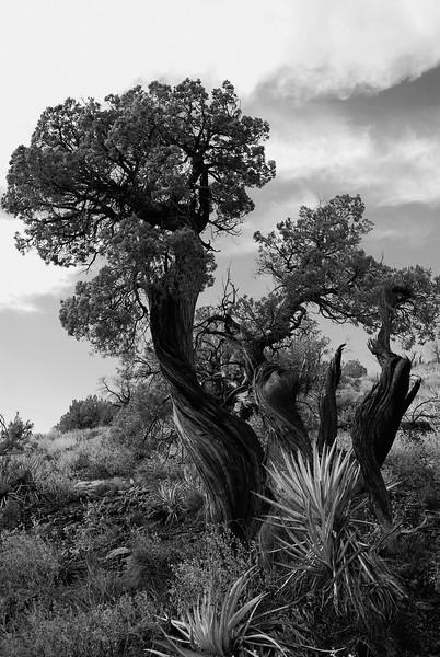 Sedona , Arizona, USA