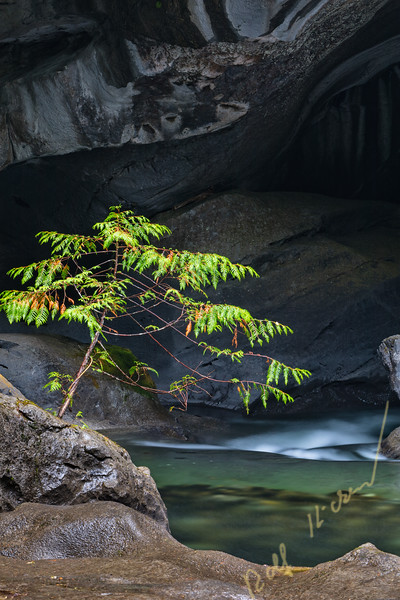 Little tree at Little Huson Cave Regional Park on Northern Vancouver Island, British Columbia, Canada.