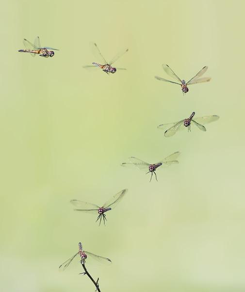 dargon fly landing composite.jpg