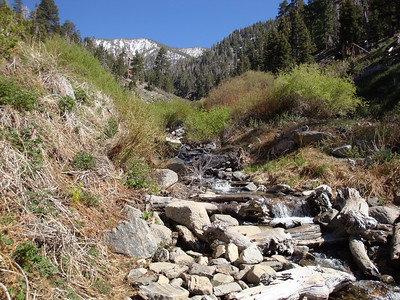 Trail Run to Johns Meadow in the San Gorgonio Wilderness 5.16.08