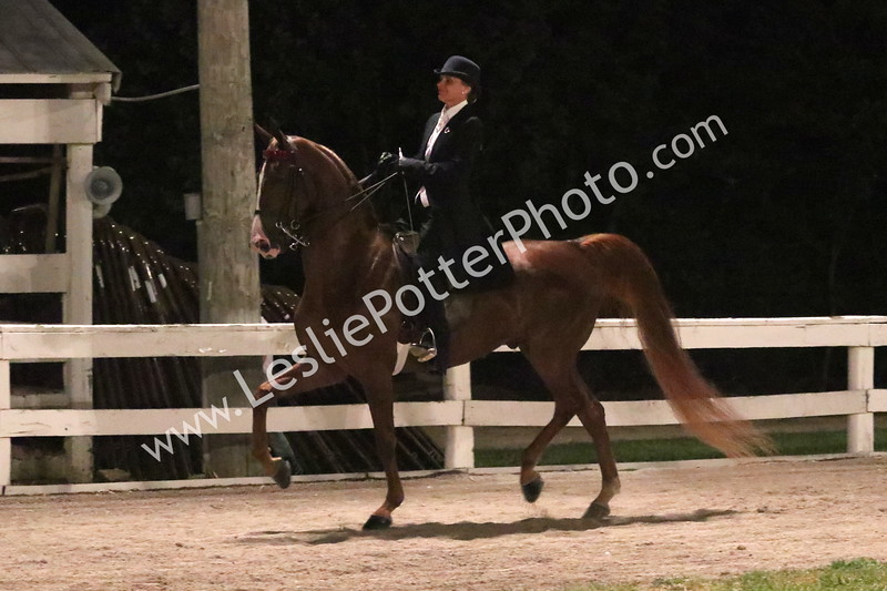 Class 26: American Saddlebred Three-Gaited Country Pleasure