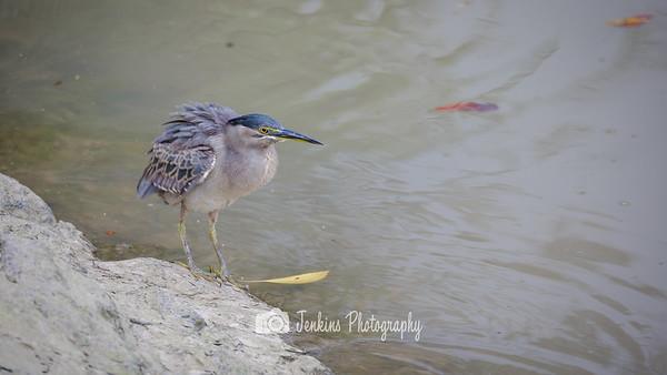 2016-12-23 First Birding Experience