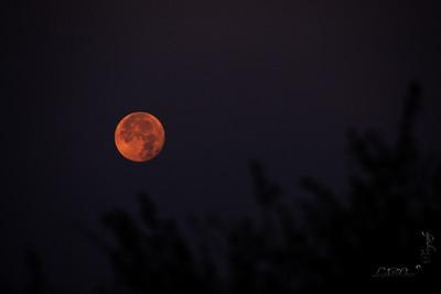 Skandagiri - Full Moon Trek