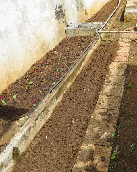 Some gardens are planted by Yanel's garden crew around the Community Center.