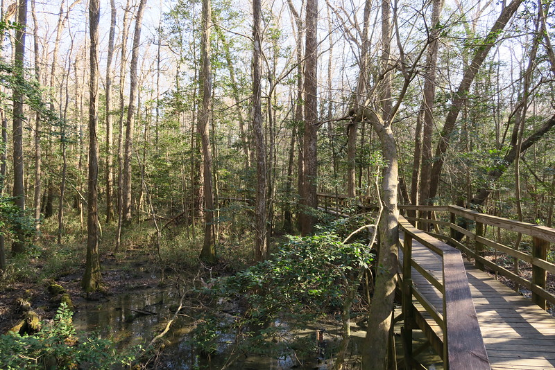 Congaree National Park (2-12-15)