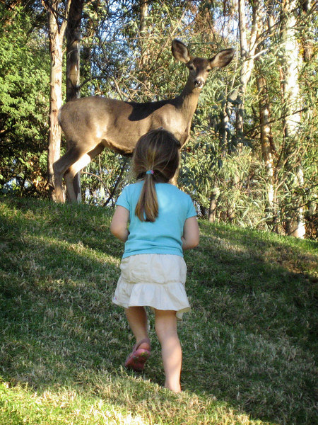 10/20 - We saw this deer in the parking lot of the Wild Animal Park. Lili was able to walk up pretty close to her.
