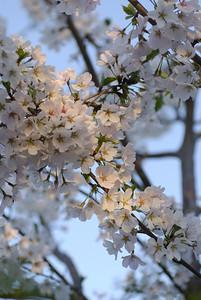 Spring colors in Champaign, Il