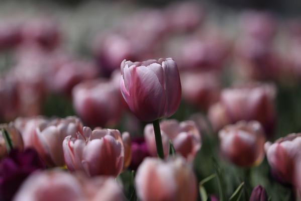 Aboreteum Floral 3-17