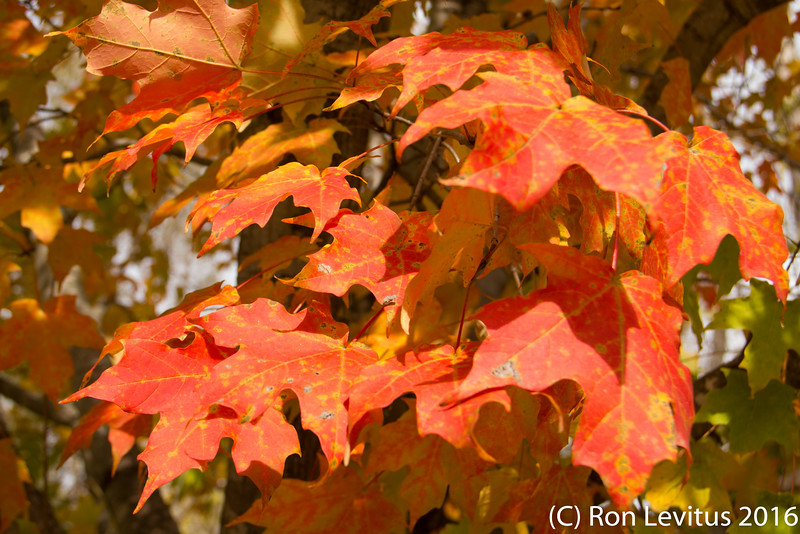 Fall Colors-2.jpg