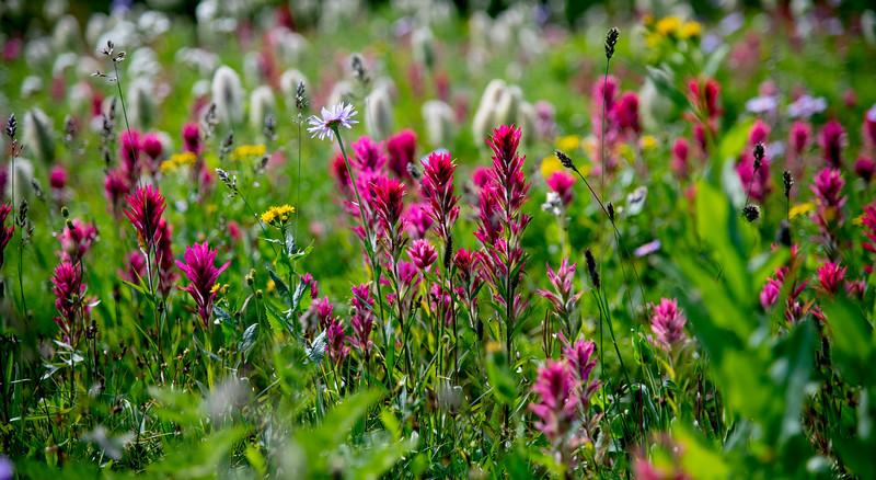 'Alpine Beauty'