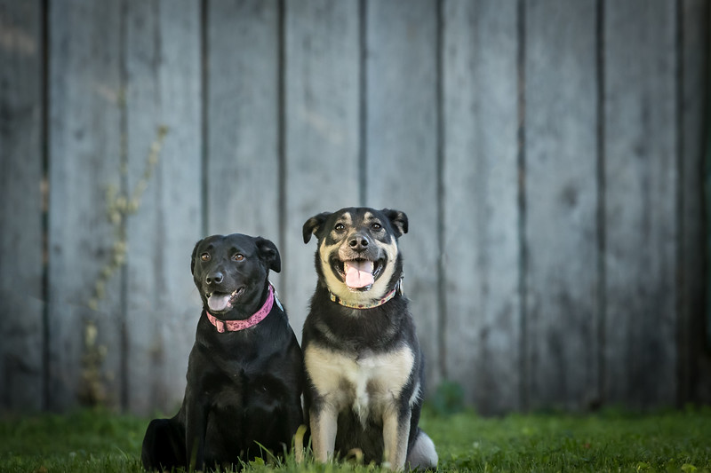 19_0712_dogs_ww--2.jpg
