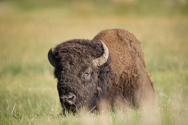 Wyoming: Yellowstone NP