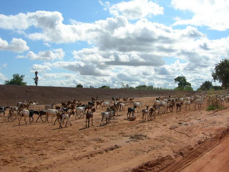 livestock8-434272162-O.jpg