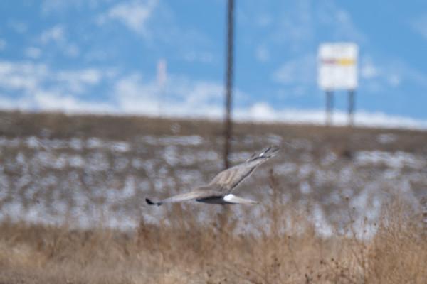 Birding North of DIA 2-18