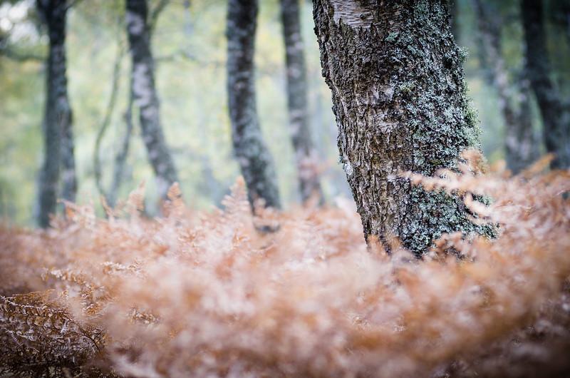 Forêt PDD.jpg