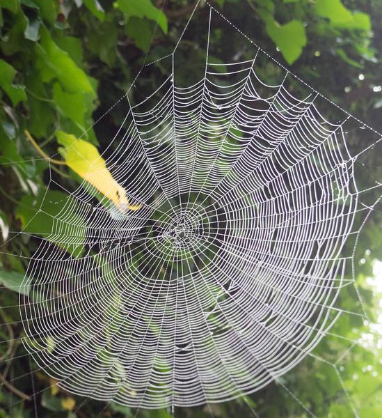 spiderwebwithdew.jpg