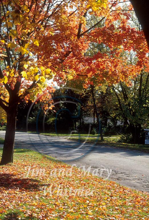 Trees_031