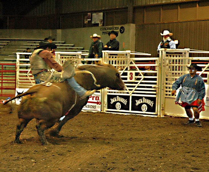 07  State Fair rodeo  bull  kicking 1 .jpg