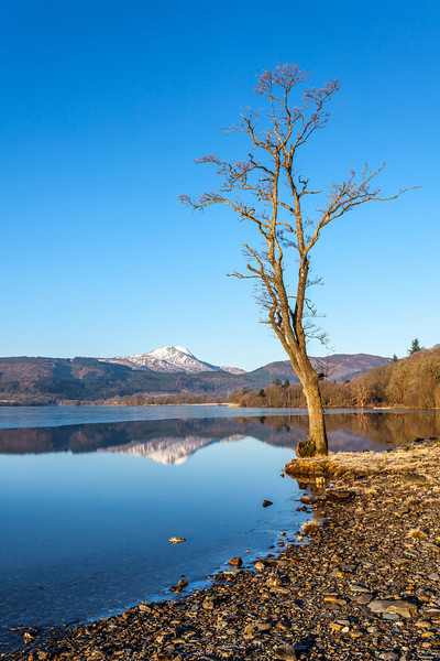 Loch Ard Framed with Tree - 8703