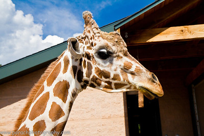 A day at Cheyenne Mountain Zoo