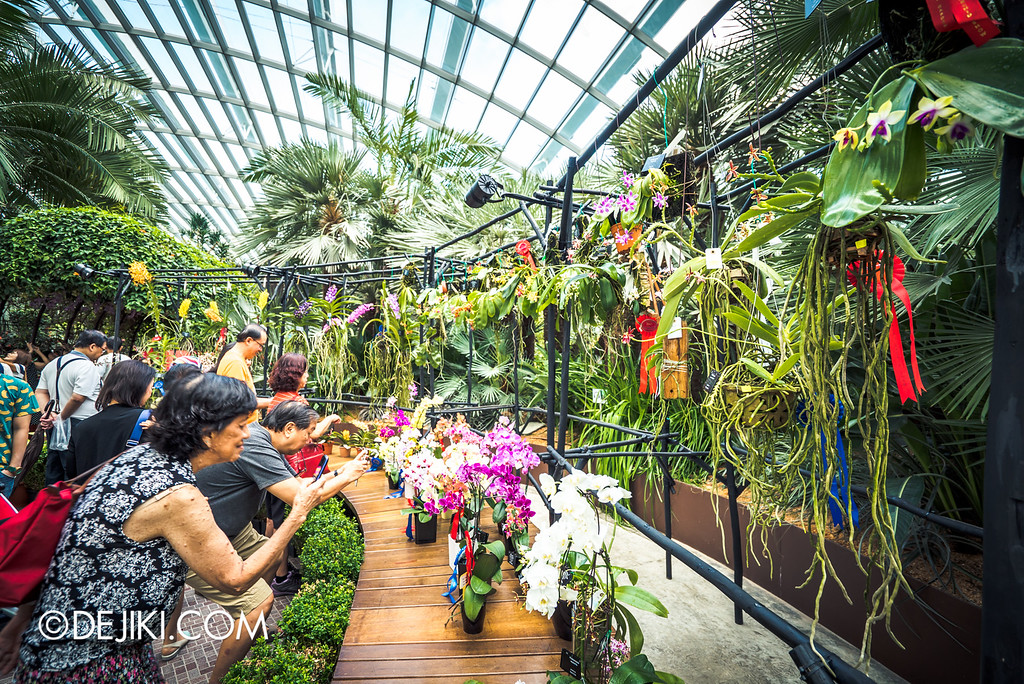 Gardens by the Bay - Orchid Extravaganza 2016 - prize winning orchids on display