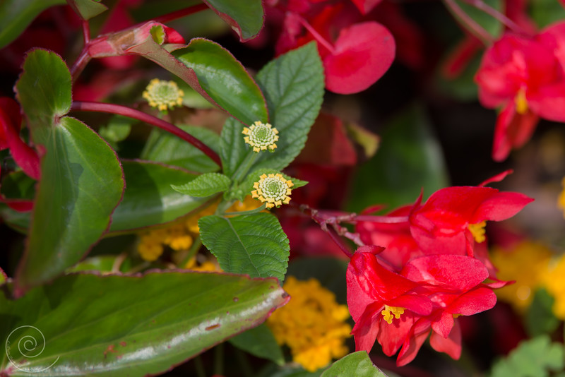 Flowers at the Spring Valley Nature Sanctuary, Schaumburg, Illinois