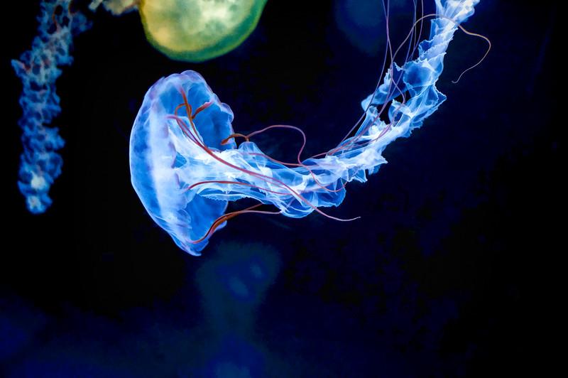 Glowing Jellyfish 032 | Wall Art Resource