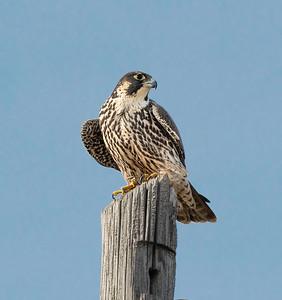 Lorain Marina Falcon