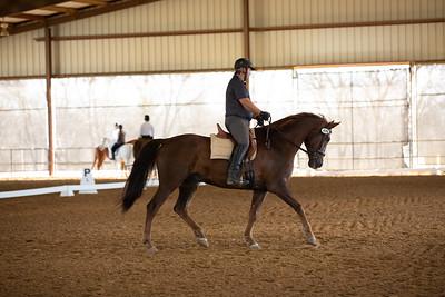 Horse 476