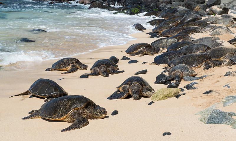 Ho'okipa Beach Park Maui Beaches