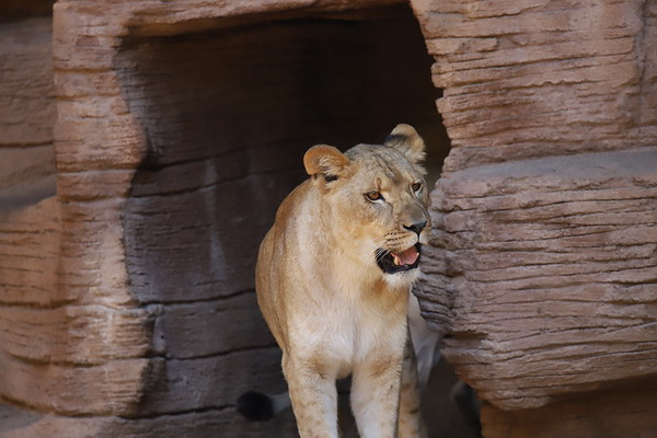 Zoo Canon 6D