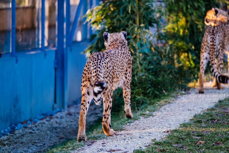 Tonis Zoo-0246.jpg