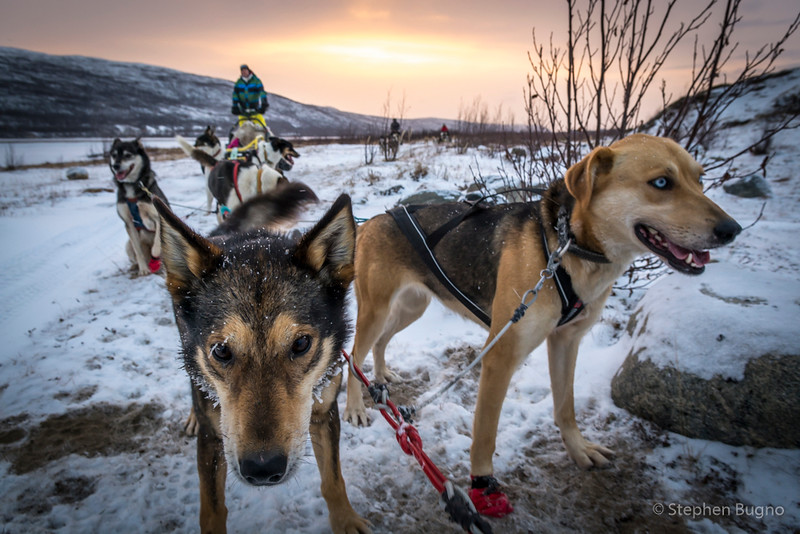 Dog Mushing-9874.jpg