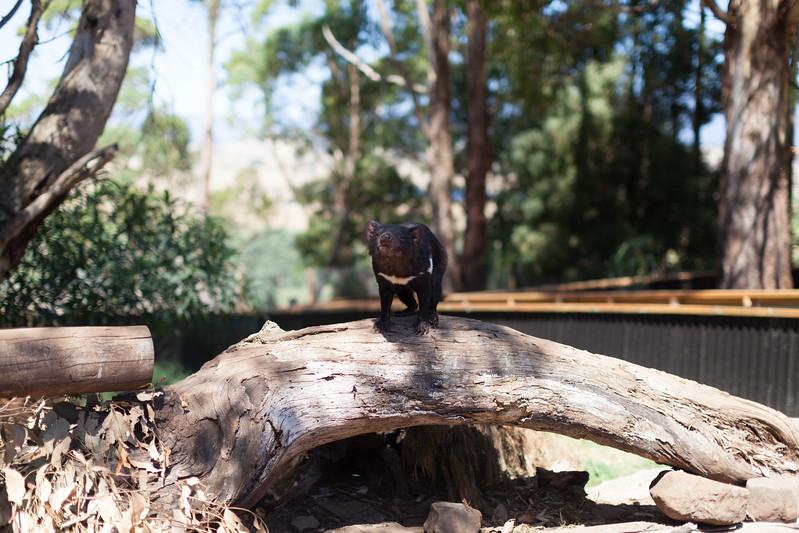Tasmania_2015_286.jpg
