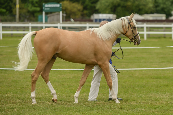 Youngstock Championship, Durrant Penmerric Gold Trophy (Exceeding 14.2hh)