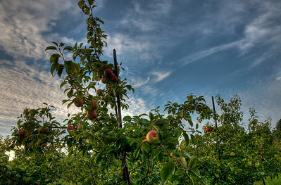 Peace Valley Orchard