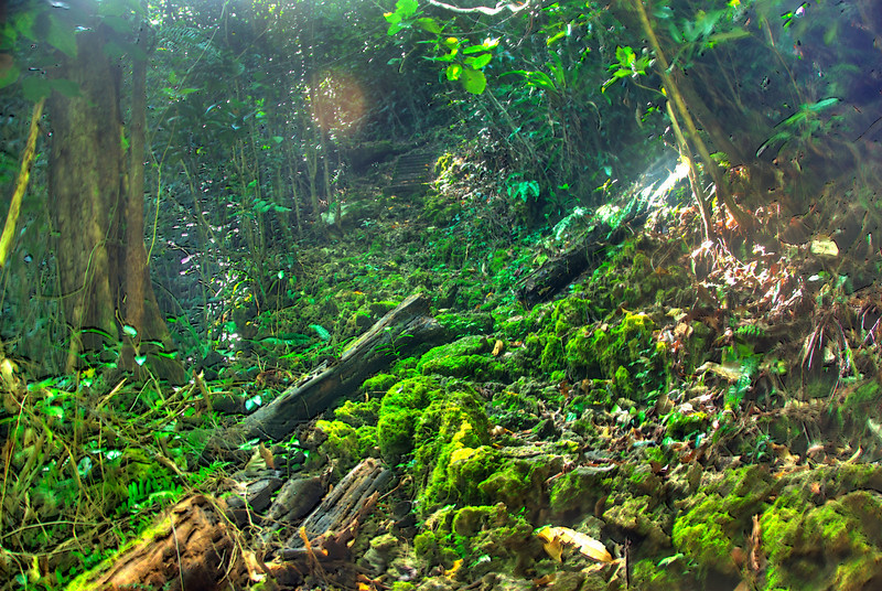 Bush Path, Rennell Island HDR- Solomon Islands